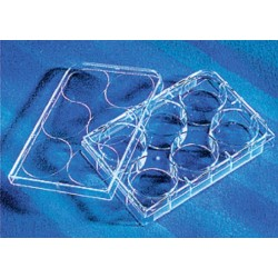 Corning 6 well Tissue culture Treated plates, with lid flat bottom, sterile 5/pack/case/100